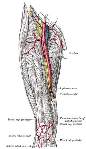 anatomia-03